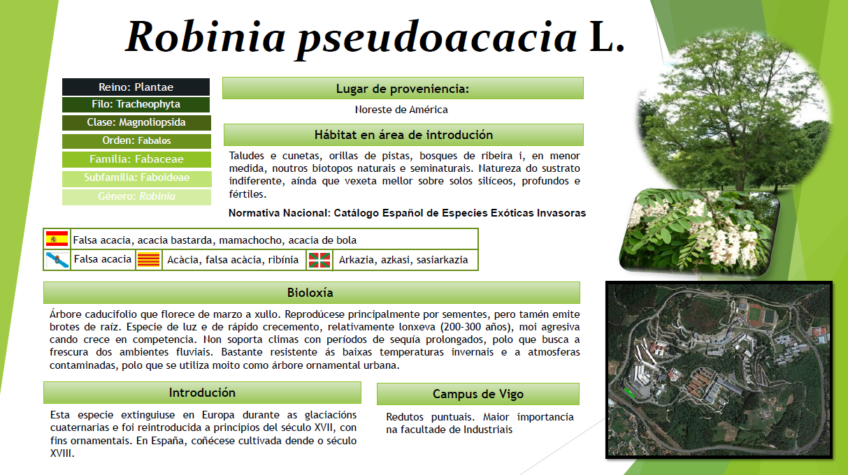 Robina pseudoacacia oma for Piscina uvigo